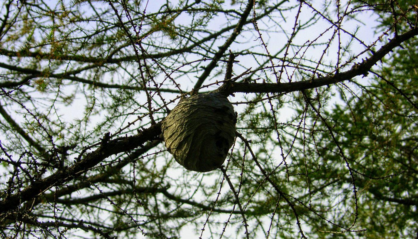 Hornet Nest East