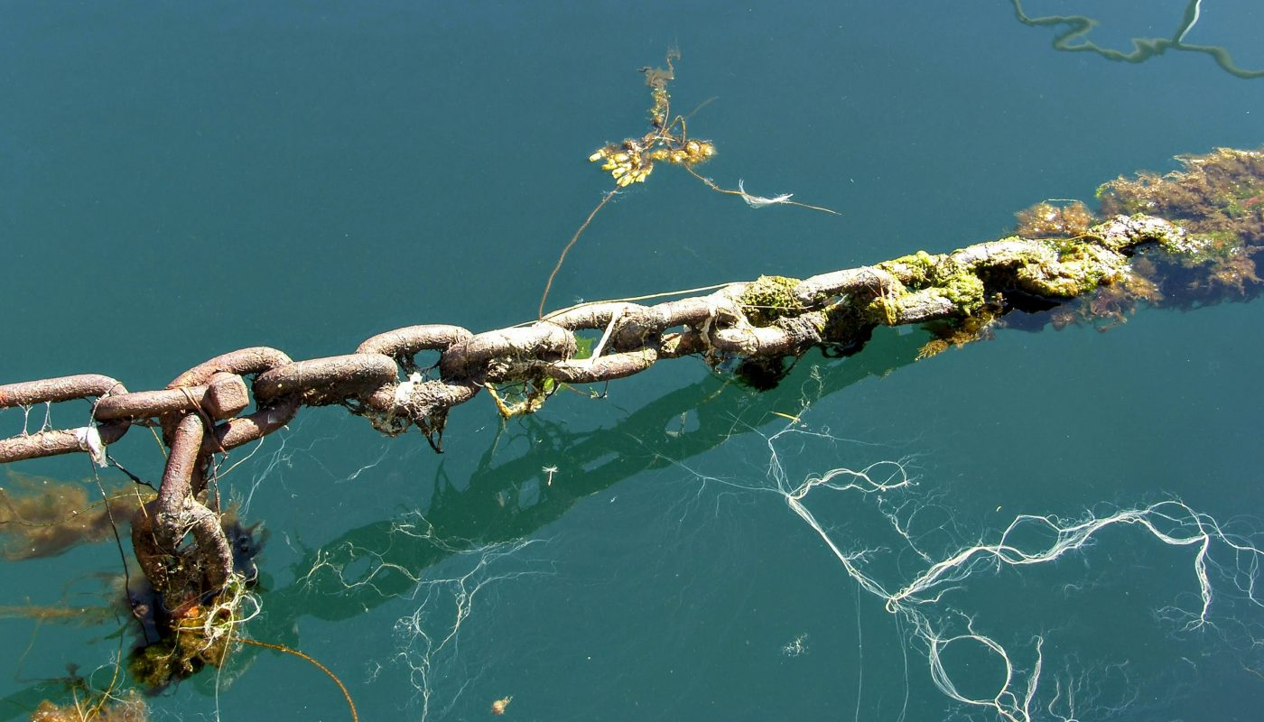 Seaweed Chain at Isafjordur Port
