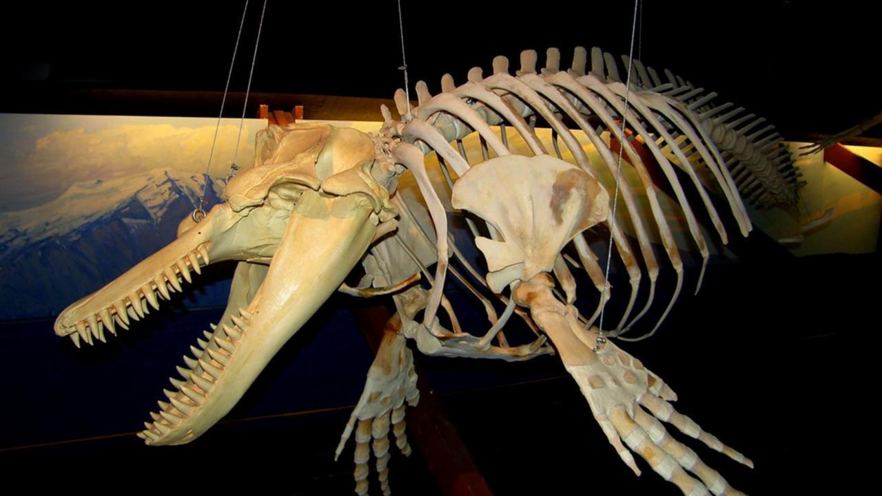 Whale Museum Husavik