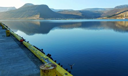 Birds At Isafjordur Harbour