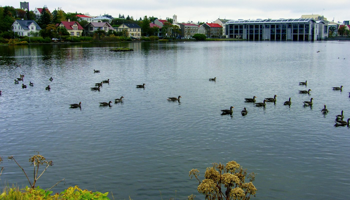 Pond And Town Hall Reykjavik