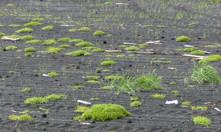 The Green in the Black Sand