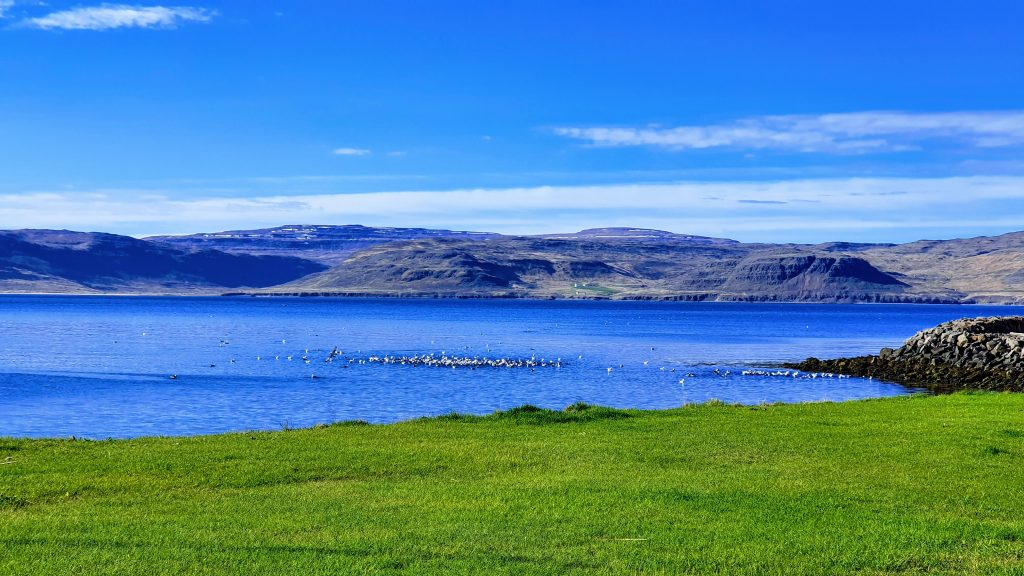 Birdlife Patreksfjörður Fjord