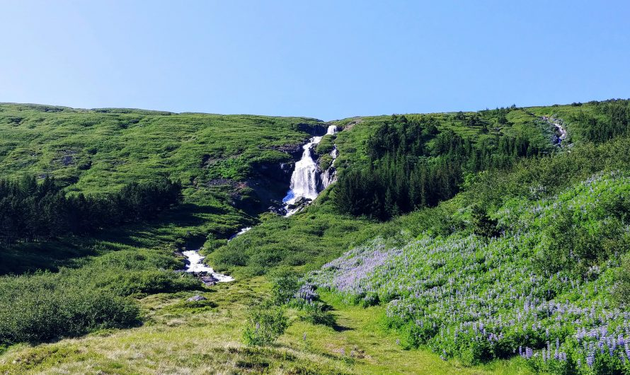 Two Wondrous Westfjords Valleys